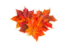 Autumn maple leaves, heart shape Stock Photography