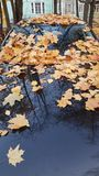 Autumn maple leaves on the hood of a car and the reflection stock photos