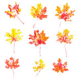 Autumn maple leaves imprint watercolor Royalty Free Stock Photo
