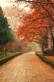 Autumn Maple Leaves In NanJing China Royalty Free Stock Image
