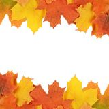 Autumn maple leaves isolated on white Stock Photography