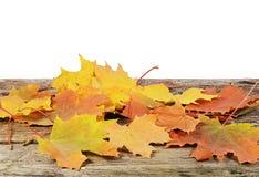 Autumn maple leaves isolated on white Stock Image
