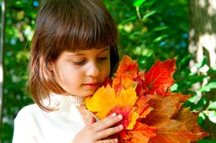 Autumn maple leaves.jpg Royalty Free Stock Photo