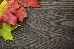 Autumn maple leaves on old oak table Royalty Free Stock Photography