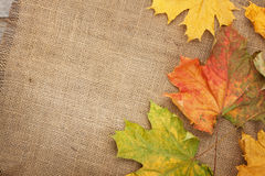 Autumn maple leaves over burlap texture background Stock Photos