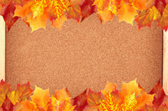 Autumn maple leaves over cork board Stock Image