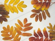 Autumn maple leaves over old wooden background with copy space royalty free stock photo