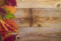 Autumn maple leaves over old wooden Royalty Free Stock Photo