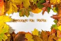 Autumn maple leaves over white background with Autumn is here text. Copy space for message Stock Photos