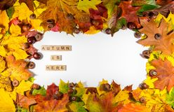 Autumn maple leaves over white background with Autumn is here text. Copy space for message Stock Image