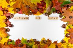 Autumn maple leaves over white background with Autumn is here text. Copy space for message Royalty Free Stock Photography