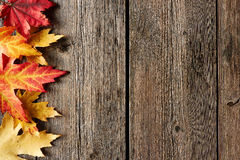 Autumn maple leaves over wooden background Stock Photography