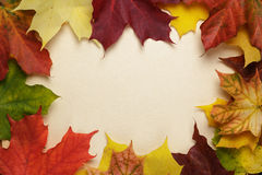 Autumn maple leaves on paper Stock Photo