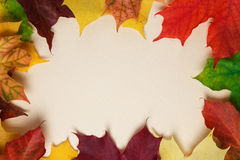 Autumn maple leaves on paper surface Royalty Free Stock Photography