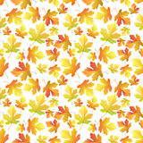 Autumn Maple leaves pattern Royalty Free Stock Photo
