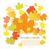 Autumn maple leaves with place for text isolated on white Stock Images