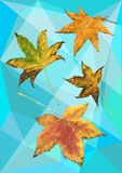 Autumn maple leaves in polygons Stock Images