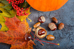 Autumn maple leaves with pumpkin and chestnuts Stock Images