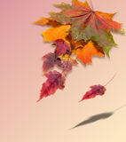 Autumn maple leaves red yellow green. free field for the text in Royalty Free Stock Photo