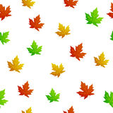 Autumn maple leaves red yellow green pattern seamless frame illustration Stock Image