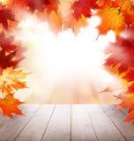 Autumn Maple Leaves rouge, Tableau en bois vide blanc et lumière du soleil Photos stock