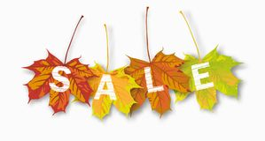 4 Autumn Maple Leaves Sale Images stock