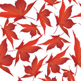 Autumn maple leaves seamless pattern background Royalty Free Stock Images