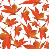 Autumn maple leaves seamless pattern background Stock Photos