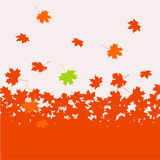 Autumn maple leaves Royalty Free Stock Image