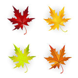 Autumn Maple Leaves Set. Royalty Free Stock Images