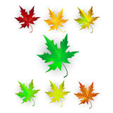 Autumn Maple Leaves Set. Royalty Free Stock Photo