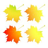 Autumn maple leaves. A set. Stock Image