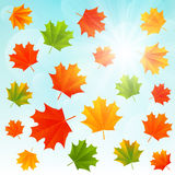 Autumn maple leaves on sunny background Royalty Free Stock Image