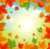 Autumn Maple Leaves And Sunshine Photo stock