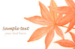 Autumn maple leaves and text. Watercolour painting of Autumn maple leaves and text Stock Images