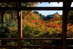 Autumn maple leaves at Tofukuji temple, Kyoto Royalty Free Stock Photos