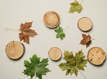 Autumn maple leaves and trunks Royalty Free Stock Photo