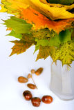 Autumn maple leaves in vase Royalty Free Stock Photos