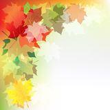 Autumn Maple Leaves. Vector Royalty Free Stock Photo