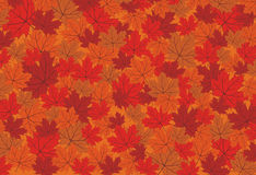 Autumn maple leaves vector background Royalty Free Stock Photography