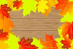 Autumnal leaf of maple. Autumn - maple leaves - vector background, Autumnal leaf of maple, Acer Royalty Free Stock Photo