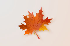 Autumn maple leaves vector drawing. Autumn maple leaves vector Vector Illustration