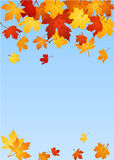 Autumn maple leaves. Vector illustration. Stock Photo