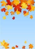 Autumn maple leaves. Vector illustration. Vector illustration of autumn maple leaves on a blue background vector illustration