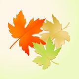 Autumn maple leaves. Vector illustration Stock Images
