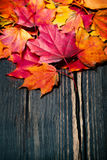 Autumn maple leaves on vintage dark wooden background with copys Stock Photos