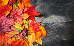 Autumn maple leaves on vintage dark wooden background with copys Stock Photo