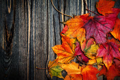 Autumn maple leaves on vintage dark wooden background with copys Stock Photography