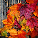 Autumn maple leaves on vintage dark wooden background with copys Royalty Free Stock Photos