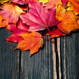 Autumn maple leaves on vintage dark wooden background with copyspace Royalty Free Stock Photo